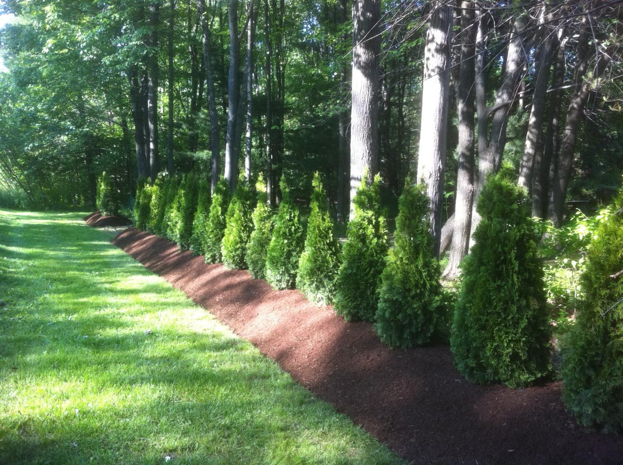 Custom landscape concepts llc landscape services How to landscape